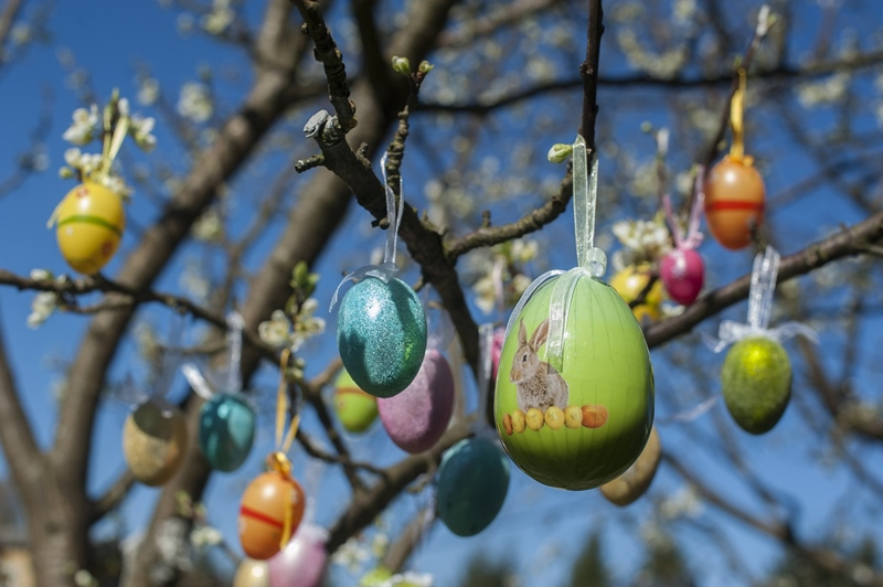 An Easter egg tree beginning to put out green shoots with colorful Easter eggs hung with translucent ribbon