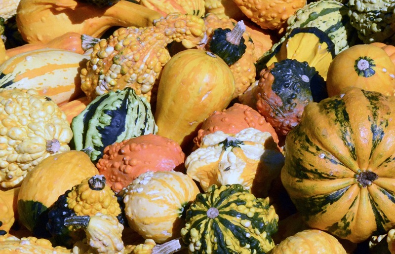 thanksgiving start g gourds