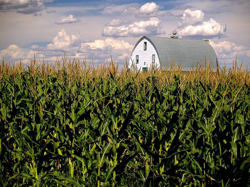thanksgiving start m maize