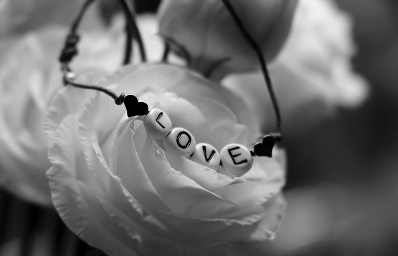 A black and white image of letter beads arranged to spell the word love on a white rose