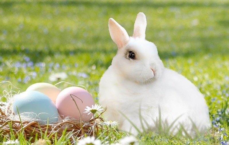 White haired bunny with black eyes and pink ears alongside basket with three pastel Easter eggs in a green grassy field